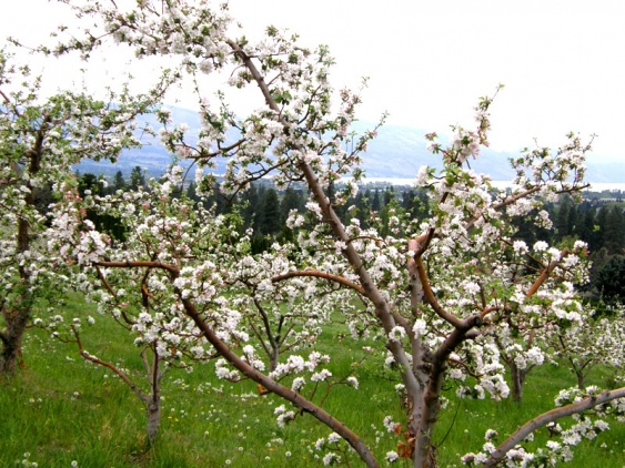 97_photo_1_Apple_Blossom_&_Lake